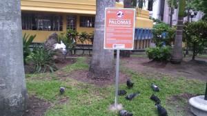 1410-letreros contra las palomas en tampico
