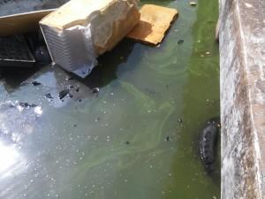 0511-urge saneamiento en laguna del carpintero (2)