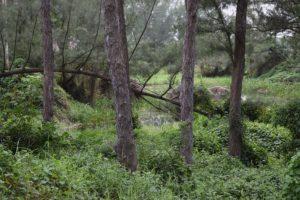 laguna-de-aguas-negras-en-zona-de-pinos-2